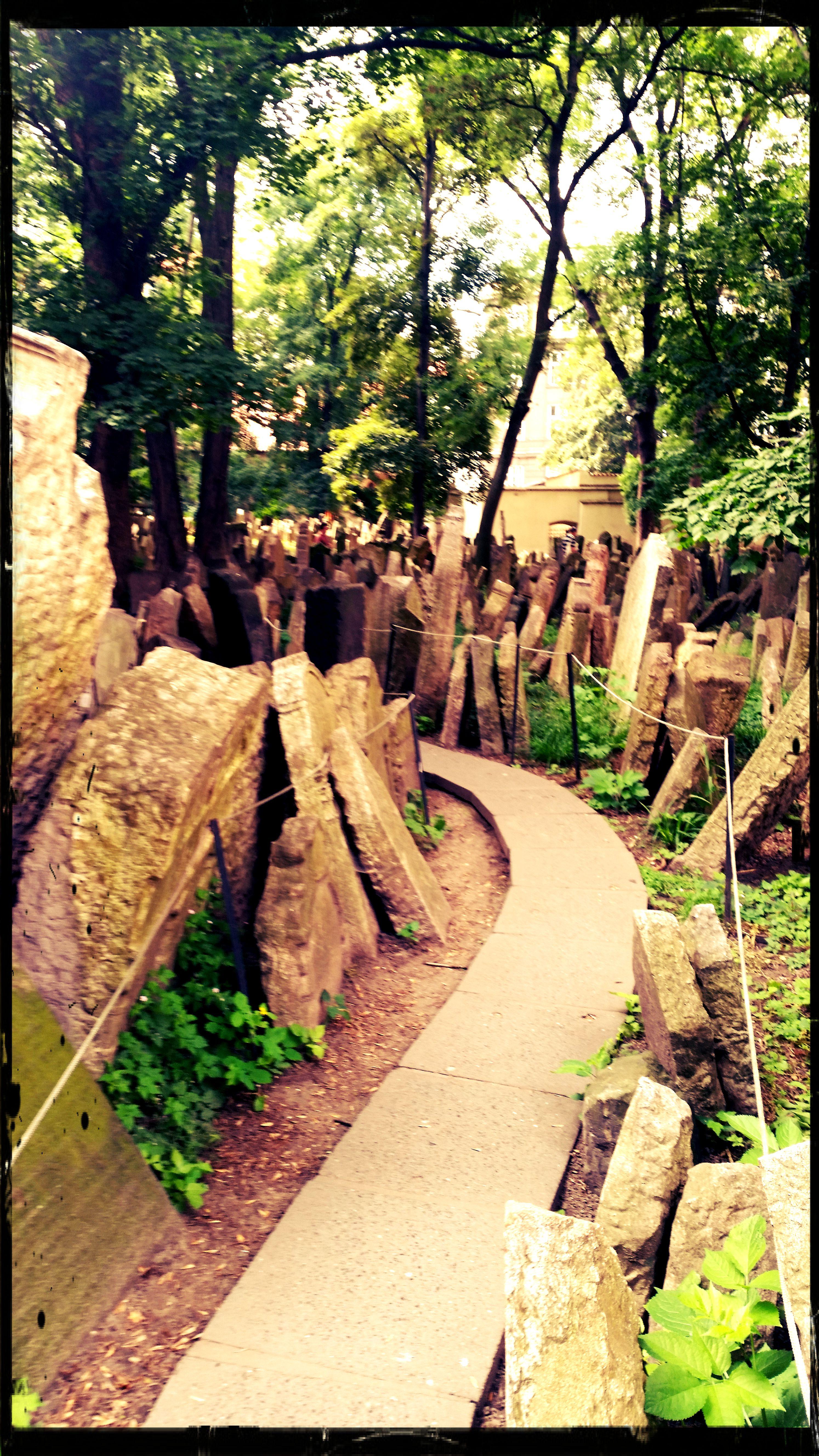 cimitero 7